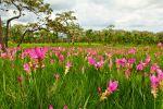 Sai-Thong-National-Park-Chaiyaphum-Thailand-02.jpg