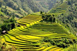 Sapa-Terraces-Lao-Cai-Vietnam-001.jpg