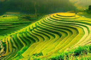 Sapa-Terraces-Lao-Cai-Vietnam-003.jpg
