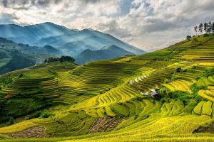 Sapa-Terraces-Lao-Cai-Vietnam-005.jpg