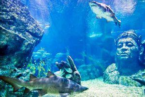 Sea-Life-Ocean-World-Bangkok-Thailand-01.jpg