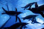 Sea-Life-Ocean-World-Bangkok-Thailand-02.jpg