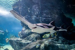 Sea-Life-Ocean-World-Bangkok-Thailand-03.jpg