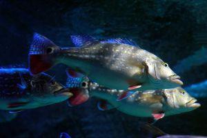 Sea-Life-Ocean-World-Bangkok-Thailand-04.jpg