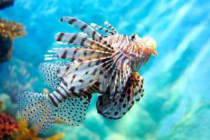 Sea-Life-Ocean-World-Bangkok-Thailand-05.jpg