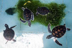 Sea-Turtle-Conservation-Center-Royal-Thai-Navy-Chonburi-Thailand-03.jpg