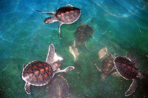 Sea-Turtle-Conservation-Center-Royal-Thai-Navy-Chonburi-Thailand-04.jpg