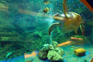 Sea-Turtle-Conservation-Center-Royal-Thai-Navy-Chonburi-Thailand-06.jpg