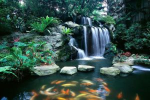 Sheraton-Towers-Hotel-Orchard-Singapore-Pond.jpg