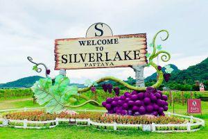 Silverlake-Vineyard-Chonburi-Thailand-01.jpg