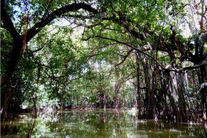 Sri-Phang-Nga-National-Park-Thailand-005.jpg