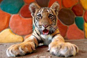 Sriracha-Tiger-Zoo-Chonburi-Thailand-03.jpg