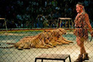 Sriracha-Tiger-Zoo-Chonburi-Thailand-04.jpg