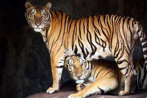 Sriracha-Tiger-Zoo-Chonburi-Thailand-06.jpg