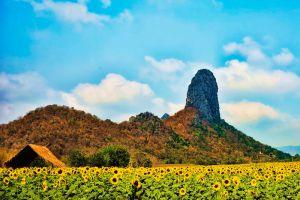 Sunflower-Fields-Saraburi-Thailand-004.jpg