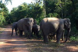 Sup-Langka-Wildlife-Sanctuary-Lopburi-Thailand-04.jpg