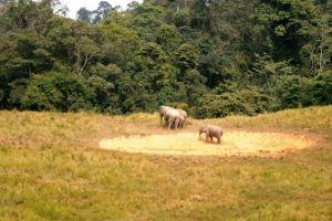 Ta-Phraya-National-Park-Sakaew-Thailand-003.jpg