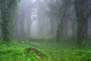 Ta-Phraya-National-Park-Sakaew-Thailand-004.jpg
