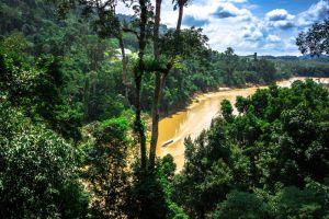 Taman-Negara-National-Park-Kelantan-Malaysia-001.jpg
