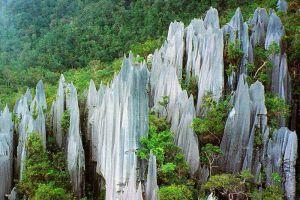 Taman-Negara-National-Park-Kelantan-Malaysia-002.jpg