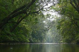 Taman-Negara-National-Park-Kelantan-Malaysia-005.jpg