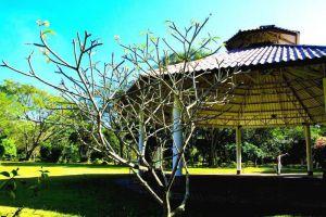 Tao-Garden-Health-Spa-Resort-Chiang-Mai-Thailand-Garden.jpg