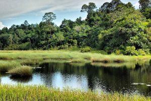 Tasek-Merimbun-Heritage-Park-Tutong-Brunei-008.jpg