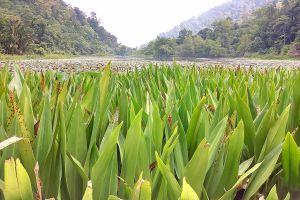 Thale-Ban-National-Park-Satun-Thailand-03.jpg