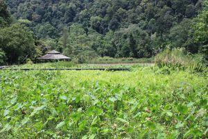 Thale-Ban-National-Park-Satun-Thailand-05.jpg