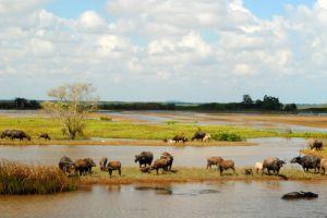 Thale-Noi-Waterfowl-Reserve-Phatthalung-Thailand-002.jpg