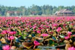 Thale-Noi-Waterfowl-Reserve-Phatthalung-Thailand-003.jpg