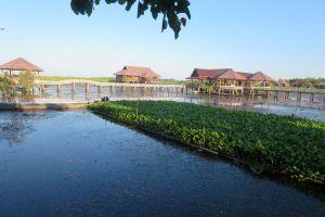 Thale-Noi-Waterfowl-Reserve-Phatthalung-Thailand-004.jpg