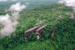 Three-Whale-Rocks-Bueng-Kan-Thailand-03.jpg
