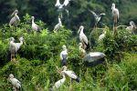 Thung-Nham-Bird-Garden-Ninh-Binh-Vietnam-001.jpg