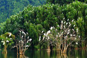 Thung-Nham-Bird-Garden-Ninh-Binh-Vietnam-002.jpg