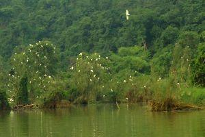 Thung-Nham-Bird-Garden-Ninh-Binh-Vietnam-004.jpg