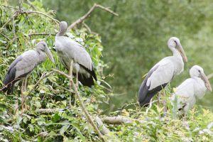 Thung-Nham-Bird-Garden-Ninh-Binh-Vietnam-005.jpg
