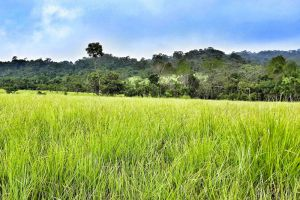 Thung-Salaeng-Luang-National-Park-Petchaboon-Thailand-004.jpg