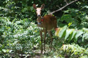 Thung-Yai-Naresuan-Huai-Kha-Khaeng-Wildlife-Sanctuary-Uthaithani-Thailand-006.jpg