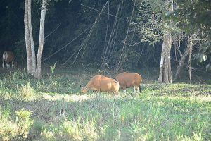 Thung-Yai-Naresuan-Huai-Kha-Khaeng-Wildlife-Sanctuary-Uthaithani-Thailand-007.jpg