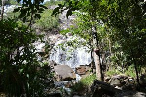 Ton-Nga-Chang-Wildlife-Sanctuary-Songkhla-Thailand-002.jpg