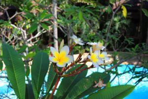 Tropical-Villa-Samui-Thailand-Pool.jpg