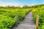 Tung-Prong-Thong-Mangrove-Forest-Rayong-Thailand-03.jpg