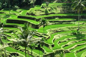 Ubud-Bali-Indonesia-002.jpg