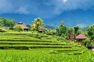 Ubud-Bali-Indonesia-004.jpg