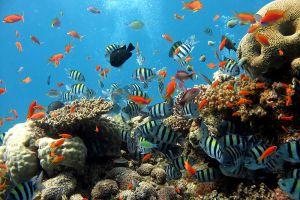 Underwater-World-Pattaya-Chonburi-Thailand-001.jpg