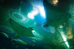 Underwater-World-Pattaya-Chonburi-Thailand-004.jpg