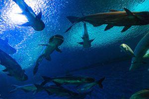 Underwater-World-Pattaya-Chonburi-Thailand-005.jpg
