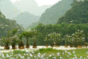 Van-Long-Natural-Reserve-Ninh-Binh-Vietnam-004.jpg