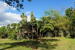 Villa-Inle-Resort-Spa-Taunggyi-Myanmar-Garden.jpg
